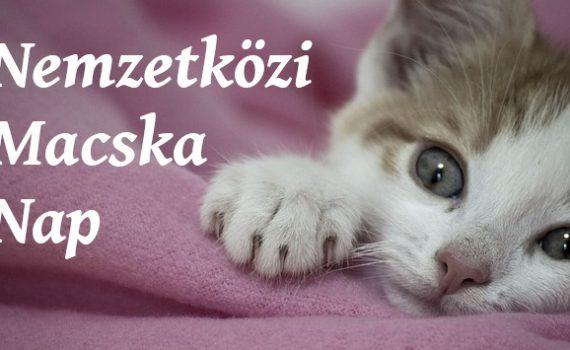 nemzetközi macska nap